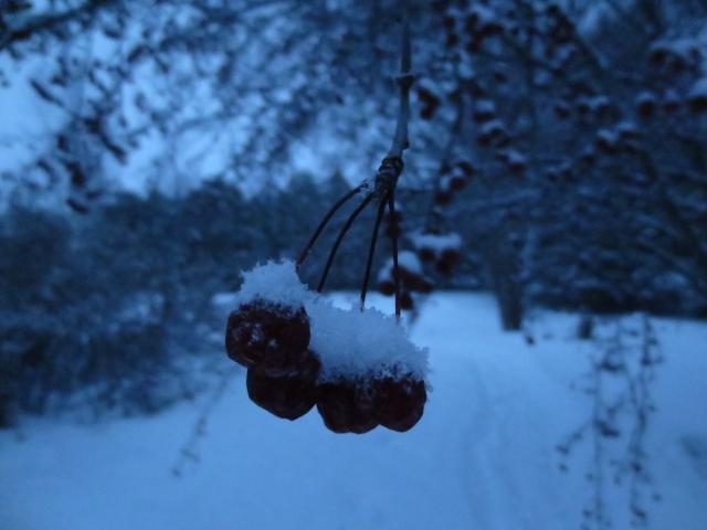 hanging onto winter