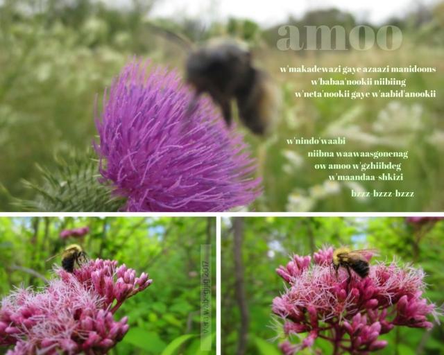 amoo - bee (5)