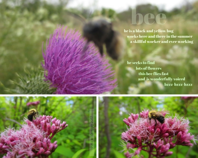 eng vers amoo - bee (1)