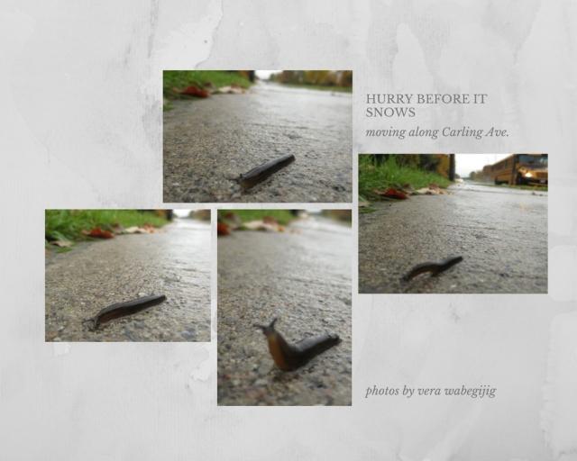 slugs (1)
